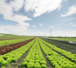 Strengthening Supply Chains and Agricultural Productivity in CLMV