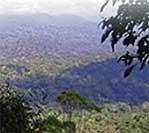 Reversing Forest Loss, Yet Again