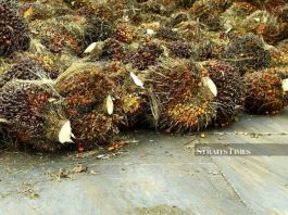 File Photo: The various types of anti-palm oil campaigns such as no palm oil labels, do not eat the rainforest and eat plants, no palm please, are driving a number of food manufacturers to reduce the consumption of palm oil in foods. - STR/ADZLAN SIDEK